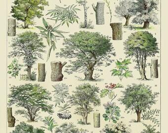 Vintage Tree Print, French Tree Chart Botanical Print Illustration Tree Poster Wall Art Home Decor #vi1002