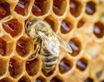 Greek Raw Honey Multi Pack-2 Sets of 3 varieties: Thyme & Herbs/Orange Blossoms/Pine Trees Honey | Honey Collection Set | Gourmet Food Gift