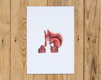 Red Squirrel Illustrated Watercolour A5 Print - British Wildlife Series