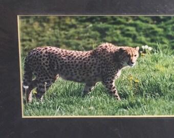 Wildlife Photography - Cheetah Photo