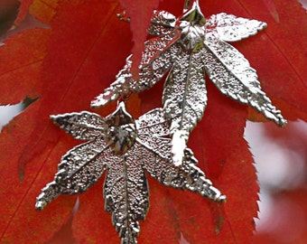 Silver Earrings real Japanese Maple leaves