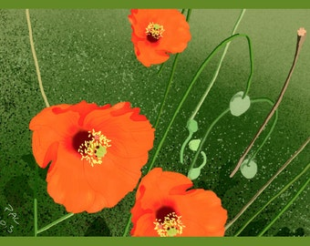 Flower Greeting Card, Blank, Wild Poppies Design No A6044