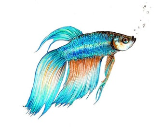 "Beta Fish art print of an original drawing available 5x7"" or 8x10"""