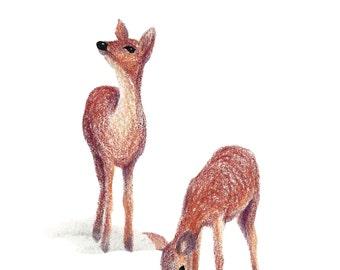 Postcard My Deer, Illustrated Postcard, Pen, Pencils and Soft Pastels