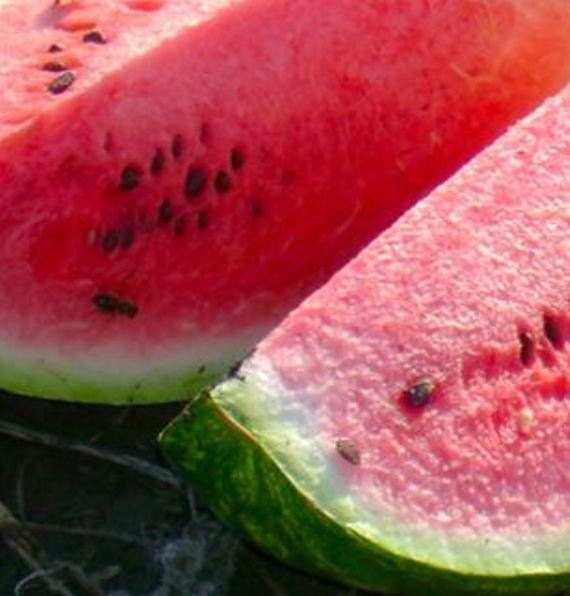 Sex with a watermelon vigna