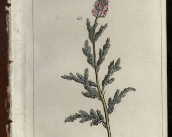 1790 Botanical engraving of ferns leaves and flowers over 200 years old