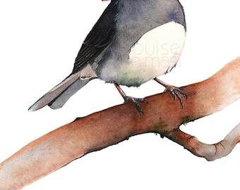 Junco watercolor painting - PRINT of watercolor painting A4 size, bird art, Junco watercolor print, J2014, American bird art