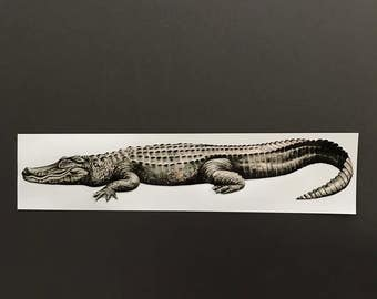 "Alligator 2 - 19""x3.5"""