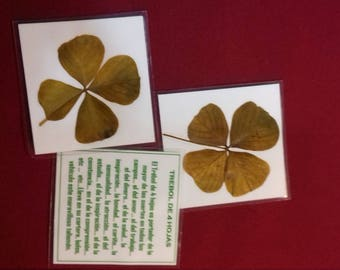 4-leaf clover. laminated 2. WITH GIFTS
