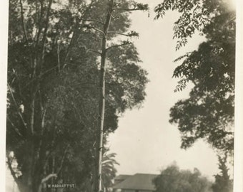 vintage photo 1932 Los Angeles West Hollywood Century Cactus