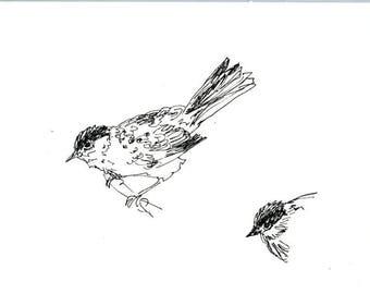 Skizzenbuch Verkauf - Vogel #16 Original Tuschezeichnung - 8 x 10 Songbird Original-Kunst