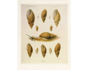 Snails Print Book Plate SALE Buy 3, get 1 Free