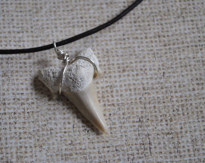 Fossil Shark Tooth pendant on leather necklace  boho, simple, minimalist