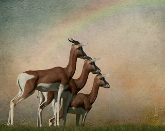 Animal Art. Fine Art Photography. Unique Animals. Gazelles. African Art. Conceptual. Wall Art. Home and Office Decor.