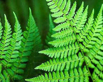 Fern Photo, Green Fern, Fern Art, Fern Leaves, Tropical Print, Botanical Print, Botanical Art, Nature Decor, Fine Art Photography Gifts