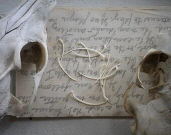 LARGE LOT Serpent Bones - Ribs - 50 Religious Educational Magic Spell Bone Real Reptile Snake
