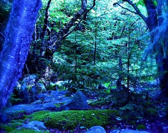 Cerulean Forest print, altered print of original photograph, enchanted forest, Dolly Sods