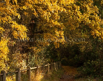 Autumnal Photo Card, Autumn Leaves Photography, Autumnal Trees Card, Tree Photography Card, Forest Tree Photography, Woodland Photo Card