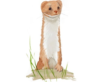 Weasel card, hello, get well soon, thinking of you, greeting