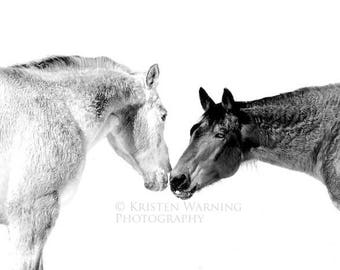 Equine Touch, Horses, Horse Photos, Equine Art, Black and White Photography, Pictures of Horses