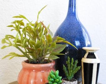 Tiny Succulent in Tiny Pot