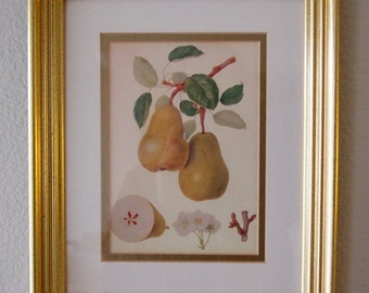 Pear Fruit Art Print in a Gold Frame