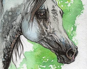 Grey arabian horse original ink and watercolor painting