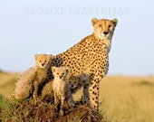 Cute Baby Animals, Cheeta...