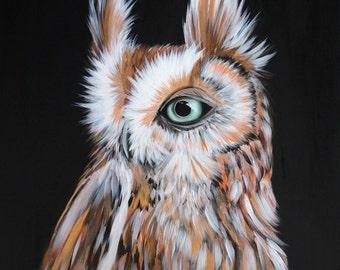 Screech Owl by Lauren Bridgstock