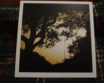 Photo Print: Tree Silhouettes