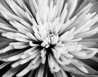 Flower Burst - Black and White Photograph