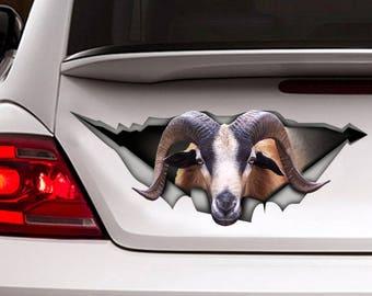 American Blackbelly sheep car decal, farm decal, sheep decal, funny sticker