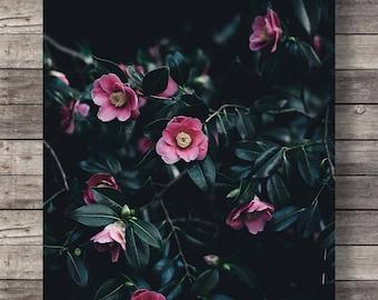 Camellia flowers photo, Printable art, Botanical camellia, pink black white floral, photography, dark flowers art print, instant download