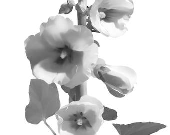 B&W Canvas Art Print Hollyhock Flower