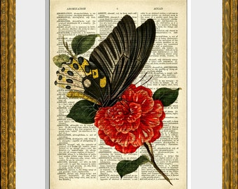 BUTTERFLY on RED FLOWER recycled book page art print - an upcycled 1800's dictionary page with an antique flower illustration - wall art