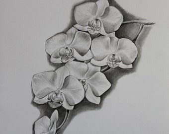 White Orchid - Original Pencil Drawing by Jane Kay- Flowers - Fine Art - Gifts for Her