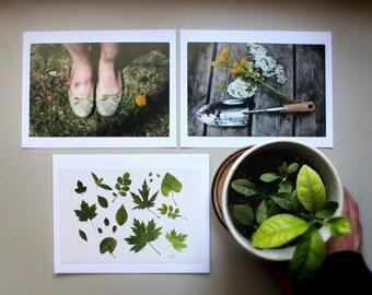 Sweet Garden, card assortment, blank inside, 4x6 art print, garden photo, set of 3 cards, gardener gift,green leaves,botanical,nature lover