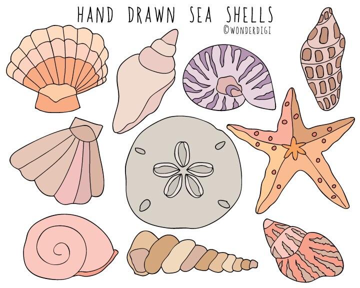 sea shells clipart hand drawn clip art beach clipart shells rh etsy com seashells clipart shells clipart free
