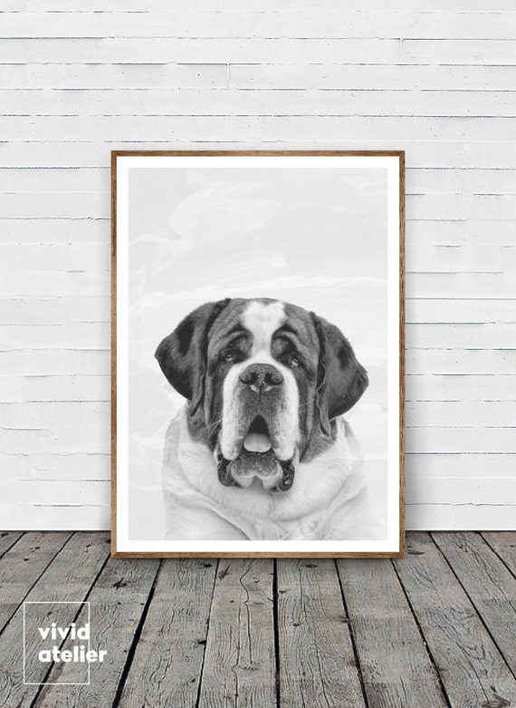 St bernard dog print saint bernard cute big dog black and white dog photo printable dog poster instant download nursery wall print
