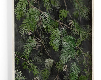 Black Pine - Pine Branches - Beautifully textured cotton canvas art print. Order as a 5x7 8x10 11x14 or 16x20 size.