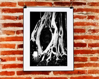 Tree Photography, Black and White Wall Decor, Mexican Photo Print, Instant Download, Mexico Print Art, Printable Tree Wall Art, Mexico