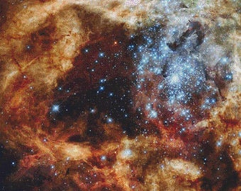 Cosmos PDF Cross Stitch Pattern
