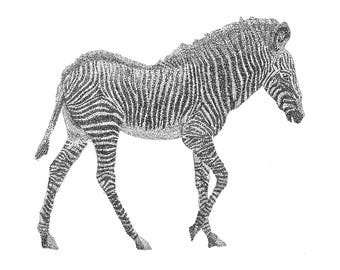 Zebra, Black and White Ink, Postcard