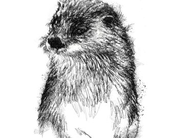 Otter sketch | Limited edition fine art print from original drawing. Free shipping.