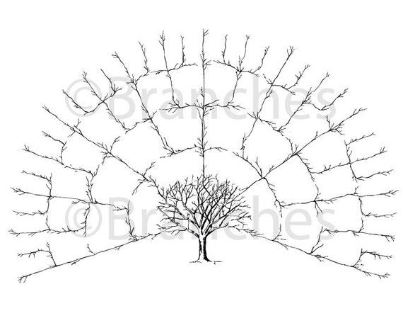 BLANK 5 Generation Family Tree Fan Chart Digital File Only