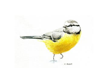 5 x 7 Song Bird Original Hand Drawn Colored Pencil Sketch