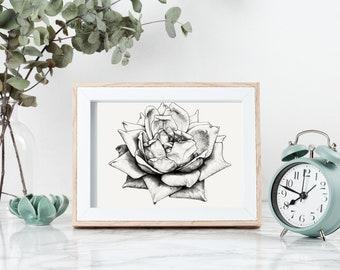 Printable Rose drawing -  printable wall art - Flower drawing - Botanical print - Flower wall art - printable botanical art - rose wall art