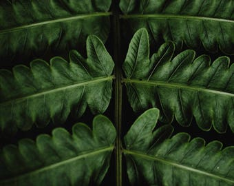 Tropical Green Leaf Branch Minimal Art Print Wall Decor Image Detail - Unframed Poster