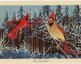 Ohio State Bird - Cardinal Vintage Postcard Signed Artist Ken Haag (unused)