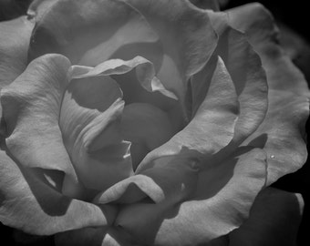 Digital Download Floral Photo, Wall Art, Black and White Photography, Nature Photography